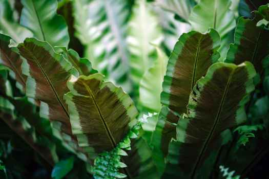 close up photograph of green leafed plant